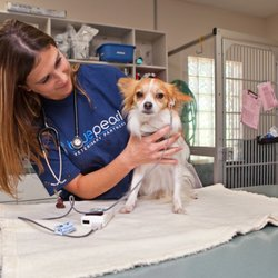 Blue Pearl Clearwater >> Bluepearl Clearwater 15 Photos 53 Reviews Veterinarians