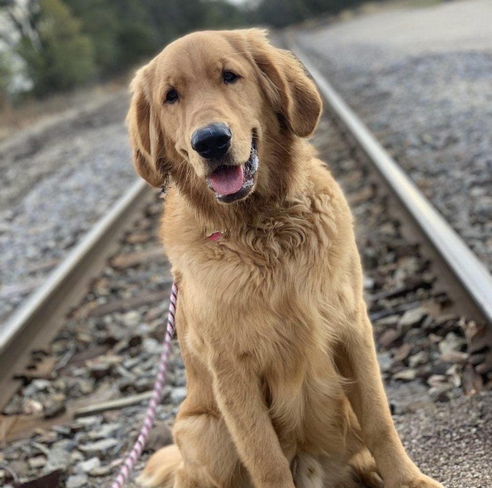 Fast Tracks Canine Activity Center: 1702 East Lake St, Cedar Falls, IA