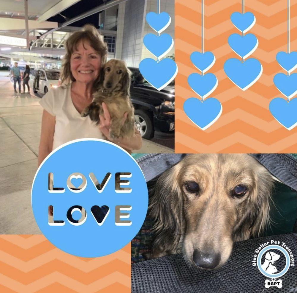 Blue Collar Pet Transport: 4530 S Orange Blossom Trl, Orlando, FL