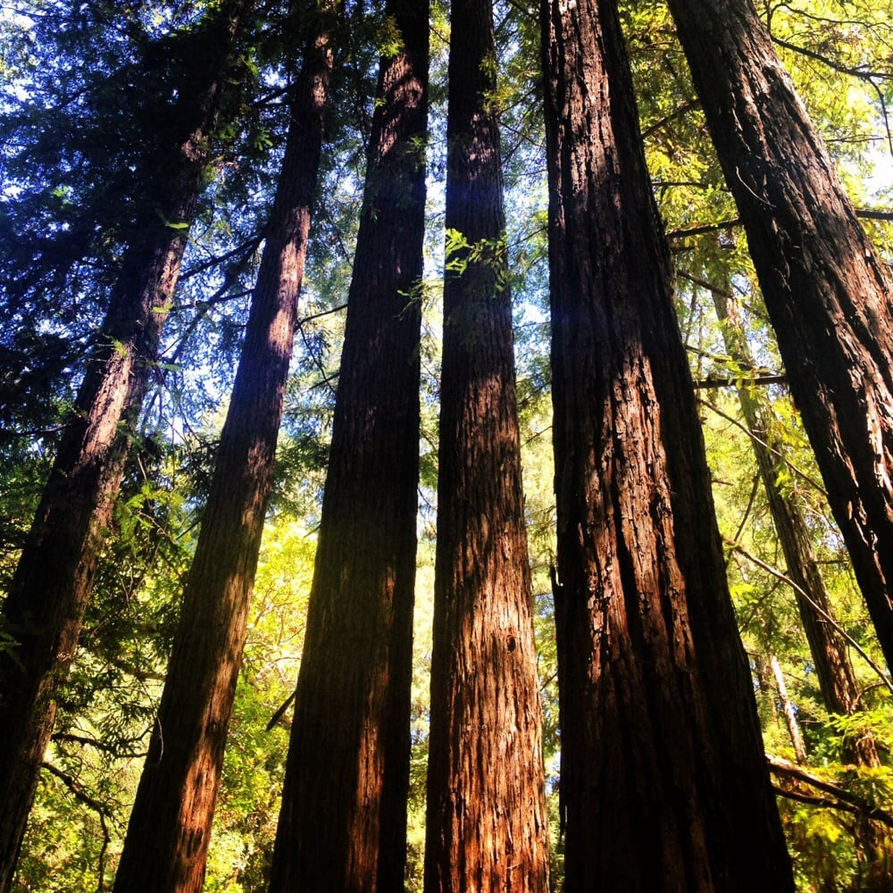 bothe napa valley state park 136 photos u0026 118 reviews parks