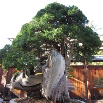 Photo Of Bonsai Garden At Lake Merritt   Oakland, CA, United States