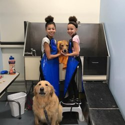 Pet stores in willowbrook yelp the original do it yourself doggie wash solutioingenieria Image collections