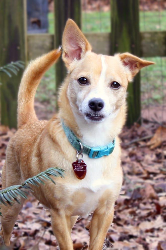 In Tune Dogs: North Burson And Fowler Mill Rd, Bogart, GA