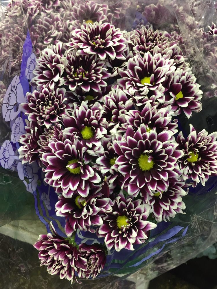 Utopia Import Flowers: 171-10 39th Ave, Queens, NY