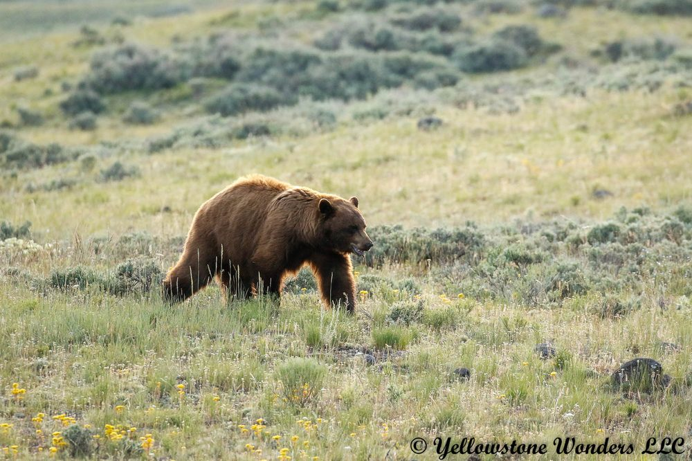 Yellowstone Wonders: Gardiner, MT