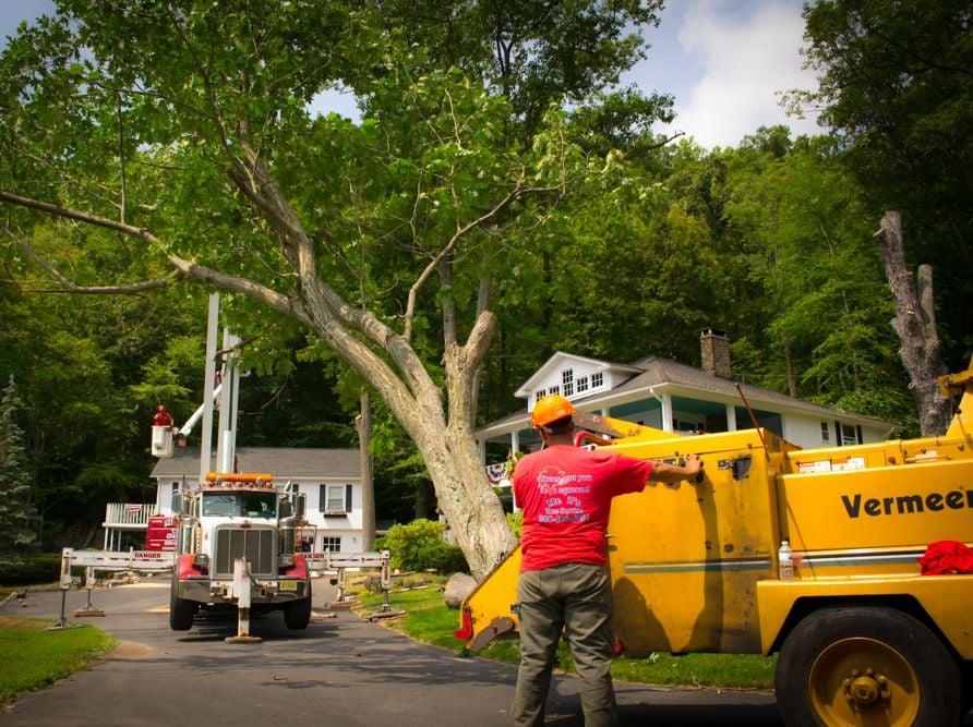 Mr. Z's Tree Service: 13 Susquehanna Ln, Columbia, NJ