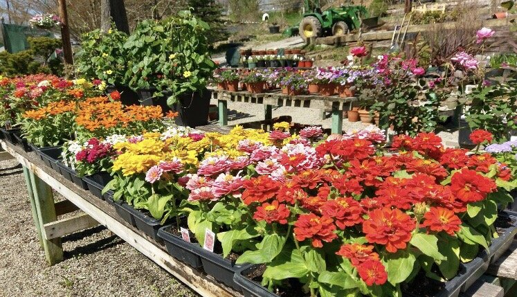 Shields Herb and Flower Farm: 374 Smith Creek Rd, Spraggs, PA
