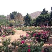 Photo Of UCR Botanic Gardens   Riverside, CA, United States. Full Bloom Rose
