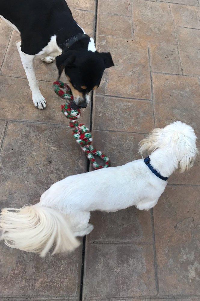 Paws On Doggy Daycare: 9441 Via Amorita, Downey, CA