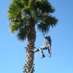 Full Canopy Tree Care 15 Foton Tr Dsk Tsel Austin