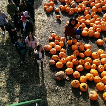 Arata Pumpkin Farm - 265 Photos & 174 Reviews - Christmas ...