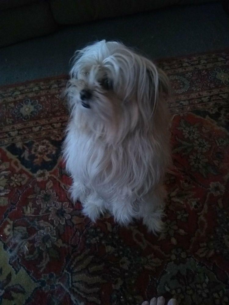 Pounds Pet Grooming: 208 Mill St, Edinboro, PA