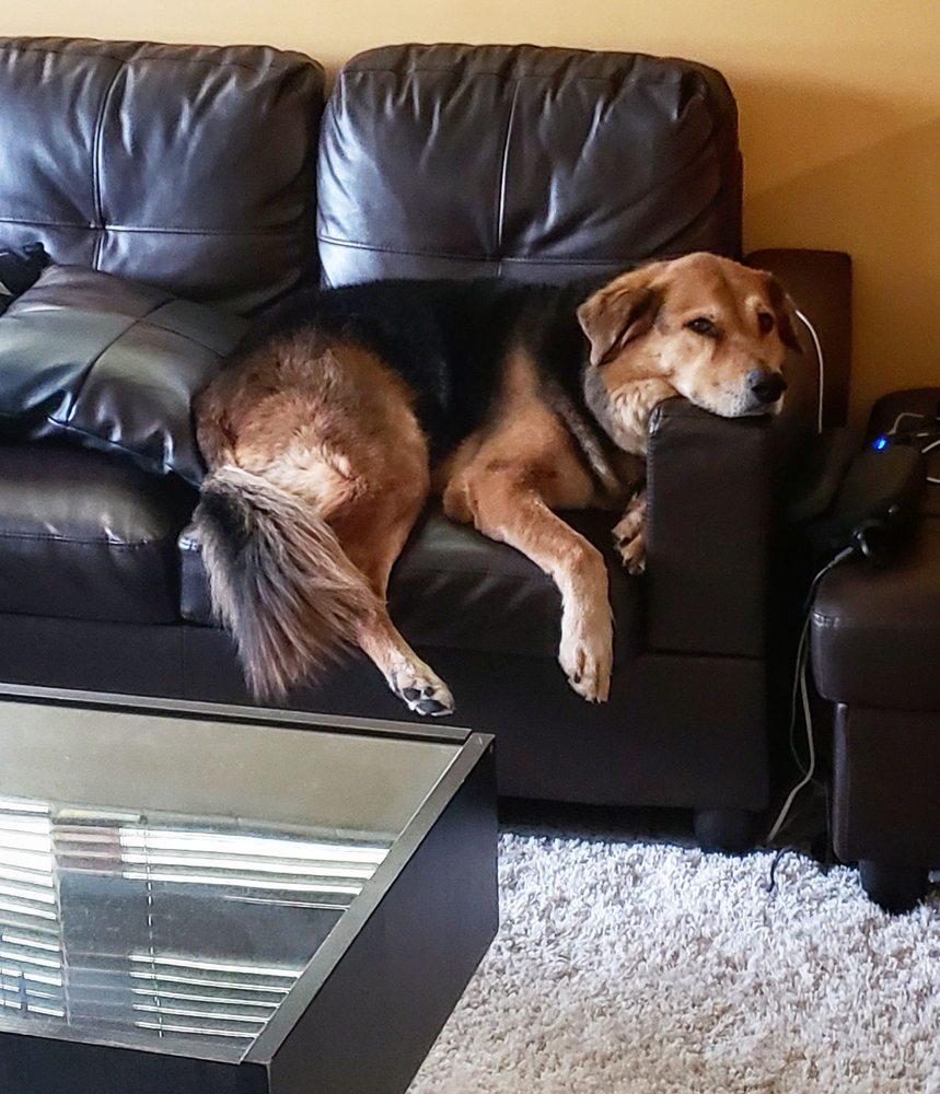 Grateful Companion Pet Care