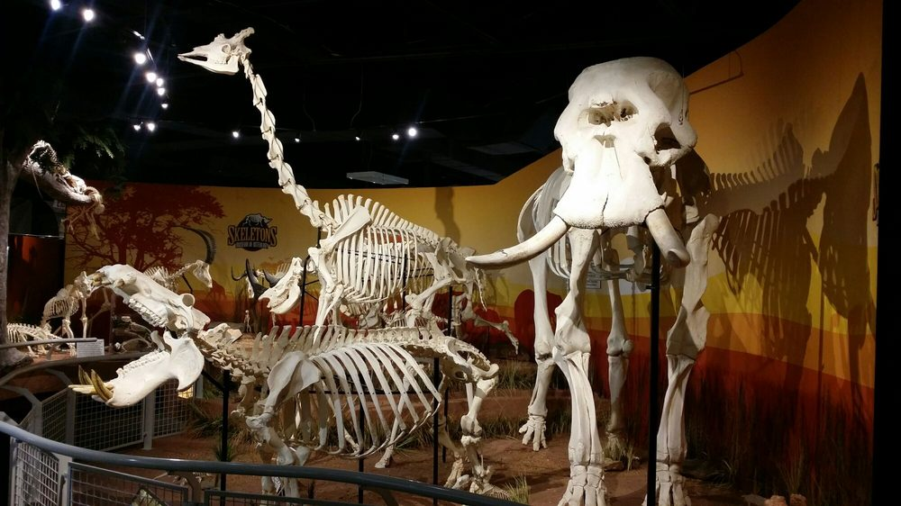 Skeletons: Museum of Osteology