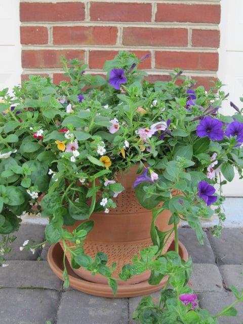 Roozen Nursery & Garden Centers: 8009 Allentown Rd, Fort Washington, MD