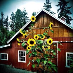 Photo of Lucy's Garden - Ridgefield, WA, United States. Beautiful barn at Lucy's