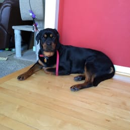 Photos For Guardian Rottweilers Yelp