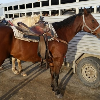 Monterey Bay Equestrian Center 141 Photos Amp 103 Reviews