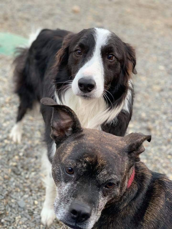 Great Bay Kennel: 27 Newmarket Rd, Durham, NH
