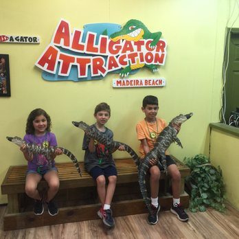 Photo Of The Alligator Attraction Madeira Beach Fl United States