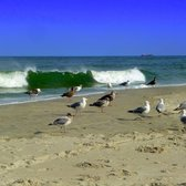 Photo Of Strathmere Beach Nj United States Seagulls Like To Hang
