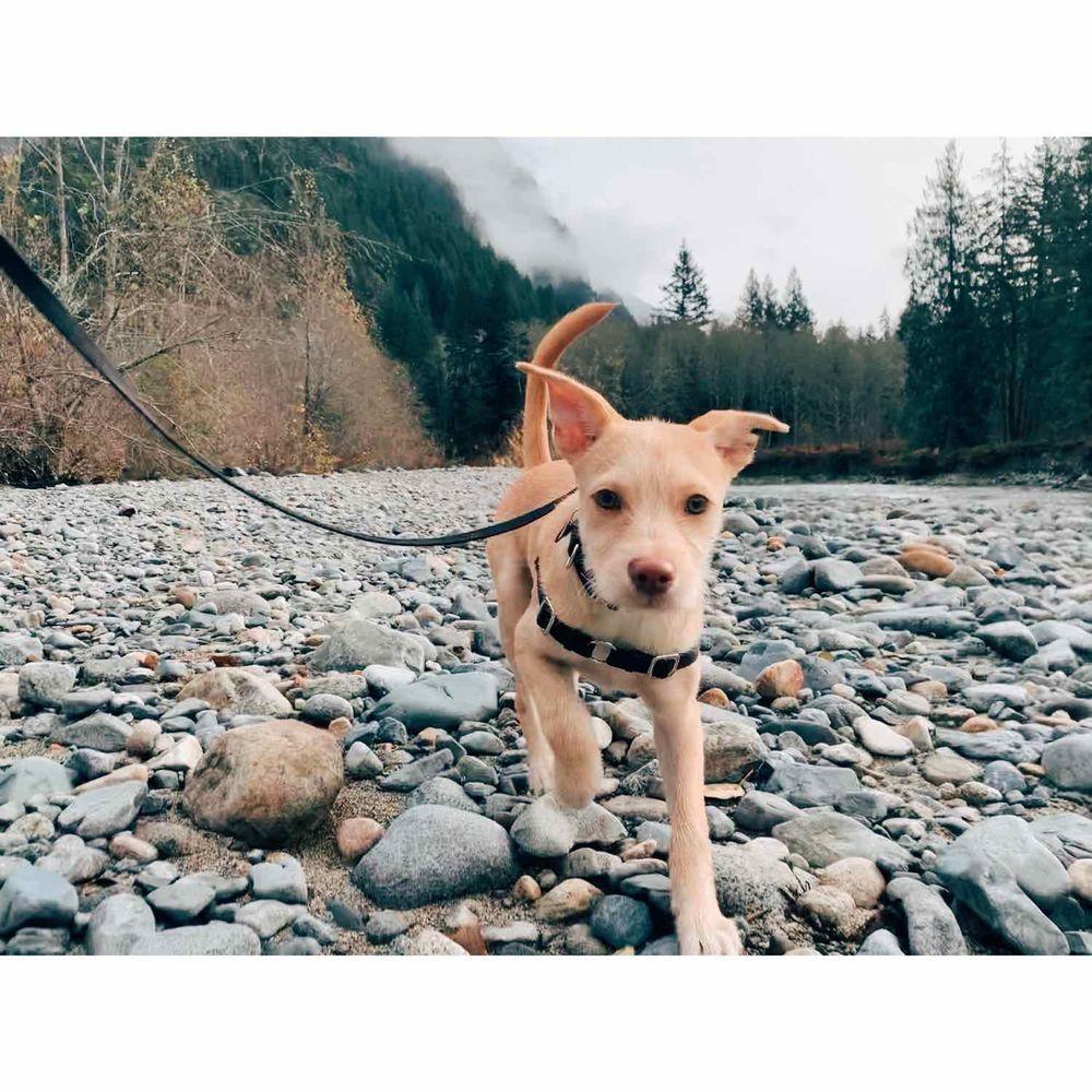 Pet Adventure: 22803 44th Ave W, Mountlake Terrace, WA