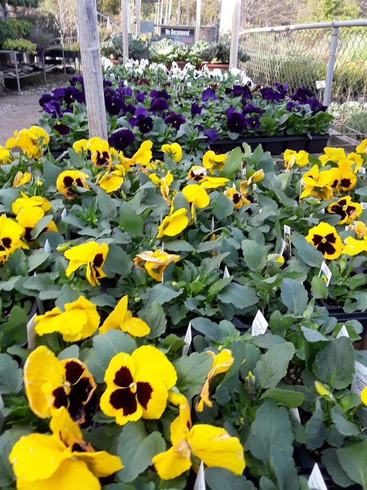 Plant World Garden Center: 420 Interstate 45 S, Fairfield, TX