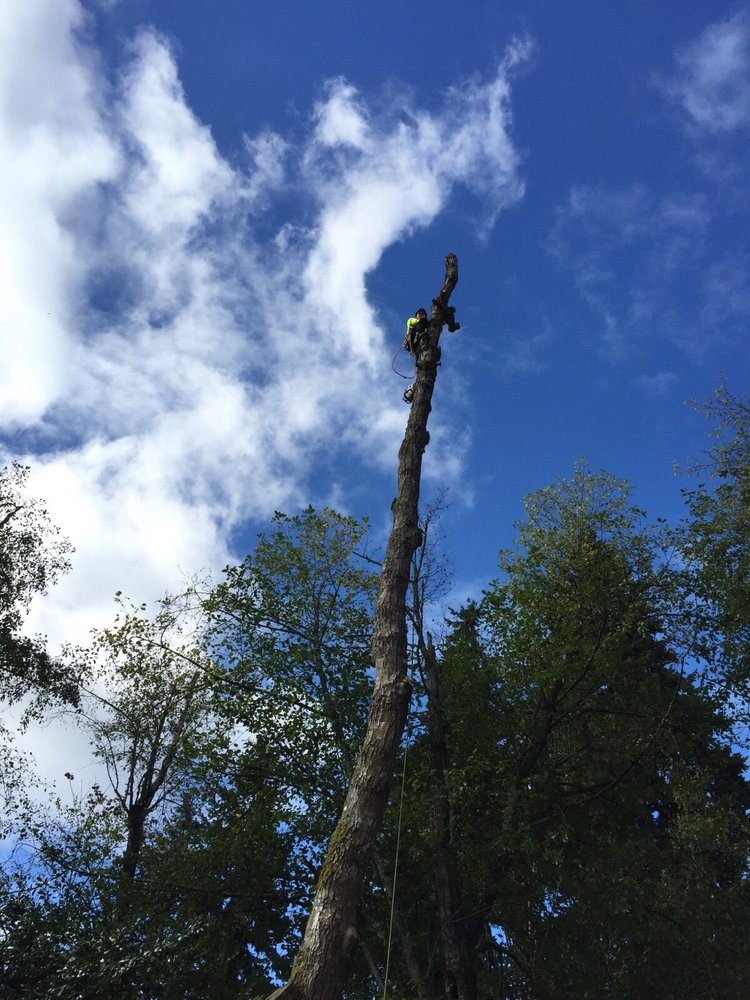 All Aspects Tree Care: 31952 Bagwell St, Carnation, WA