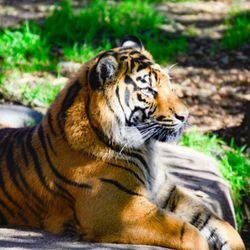 THE BEST 10 Zoos in San Mateo, CA - Last Updated June 2019