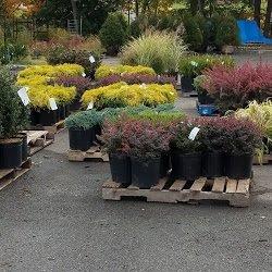 Charming Photo Of Cedar Grove Garden Center   Cedar Grove, NJ, United States