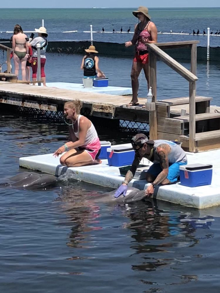 Dolphin Research Center: 58901 Overseas Hwy, Marathon, FL