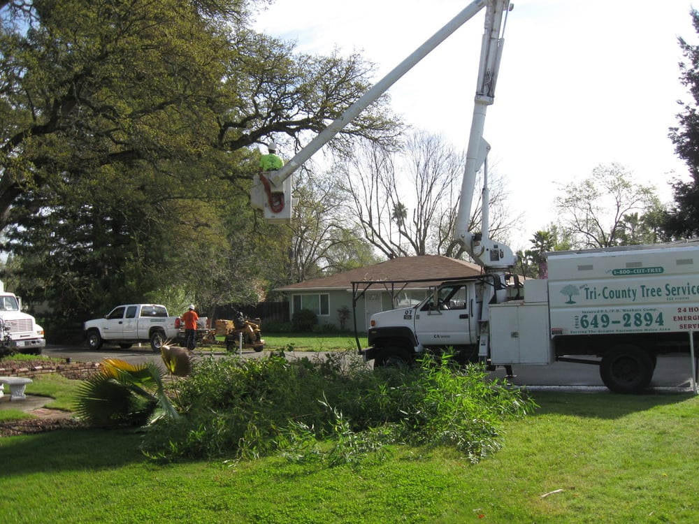Budu0027s Tri County Tree Service   31 Photos U0026 54 Reviews   Tree Services    1800 S River Rd, West Sacramento, CA   Phone Number   Yelp
