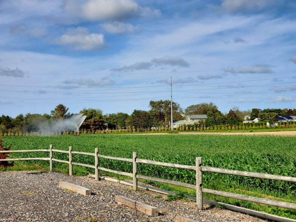 Sujecki Farms: 758 Edwards Ave, Calverton, NY
