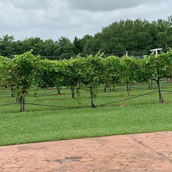 Haak Vineyards & Winery - 195 Photos & 77 Reviews - Wineries