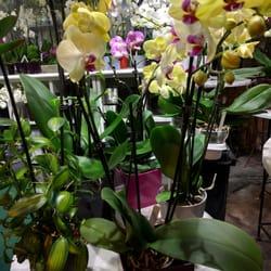 Marché aux Fleurs - Paris, France. Orchids