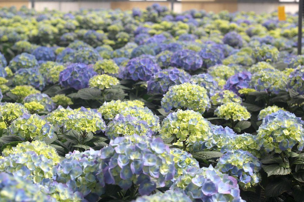 Leider Greenhouses: 1625 Leider Ln, Buffalo Grove, IL