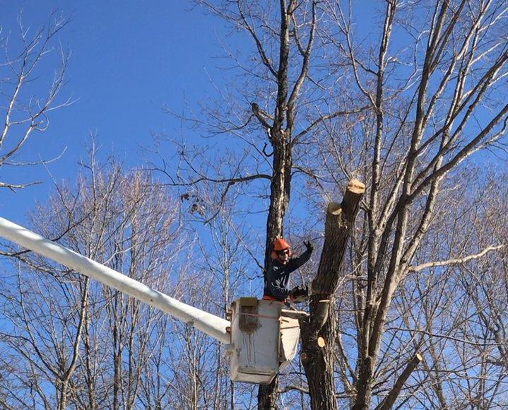 Subby Tree & Landscape Services: Pierz, MN