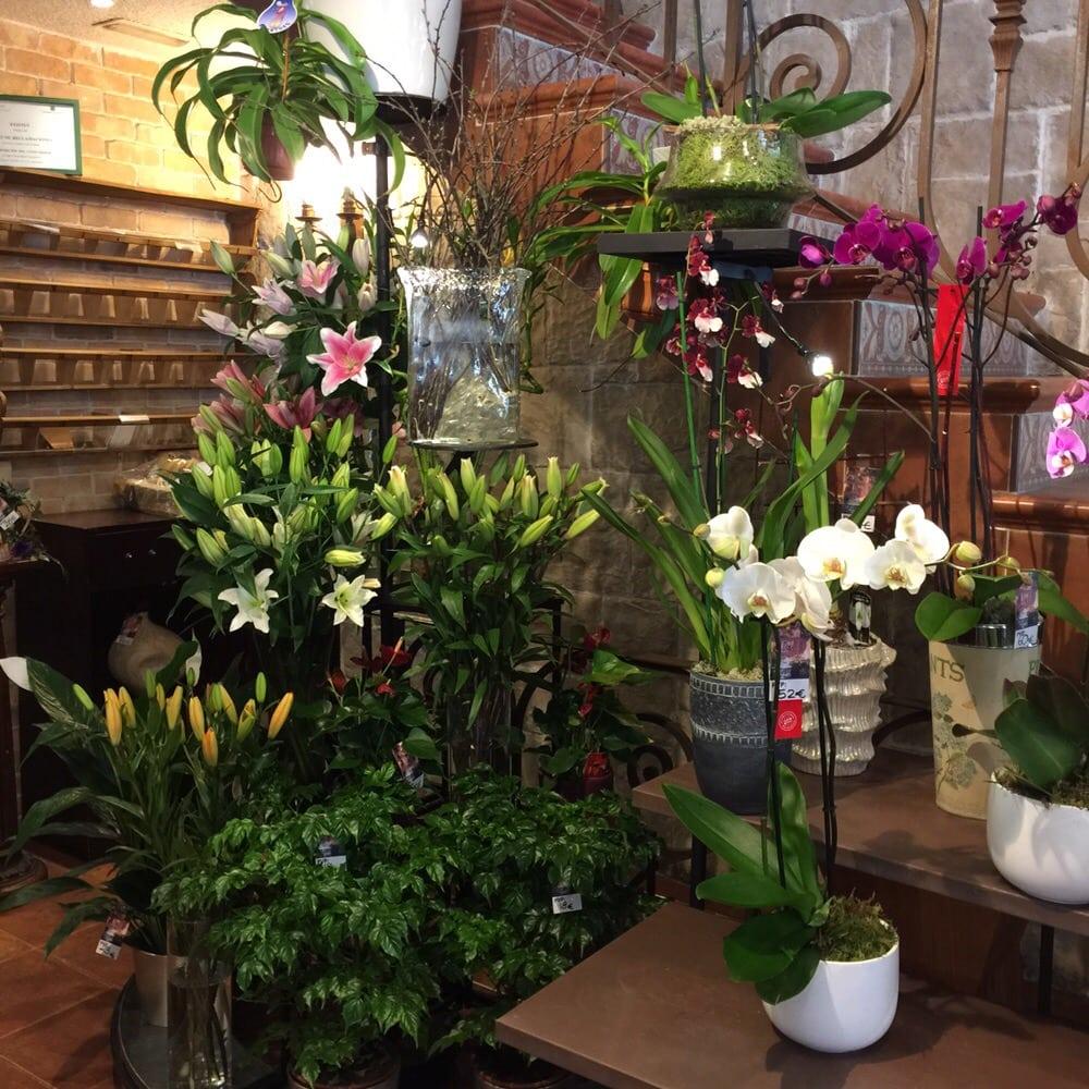 la Ponsetia-Arte Floral