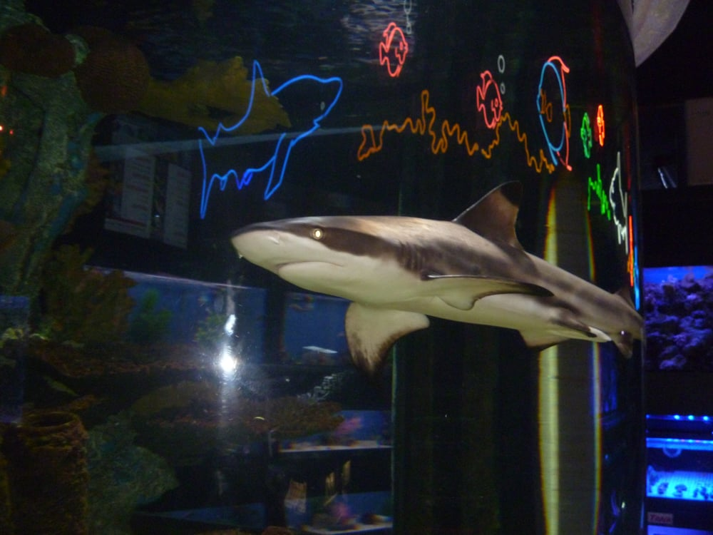 Big Al S Aquarium 38 Photos Pet Stores 1295 Kennedy