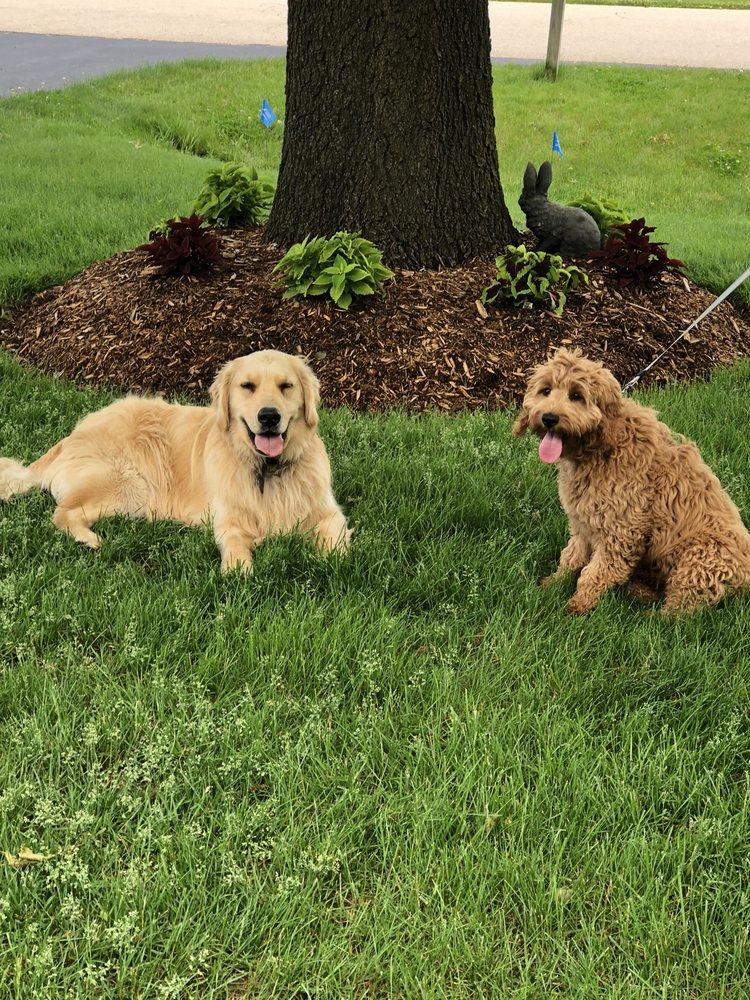 K-Pups: Loves Park, IL