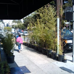 Photo Of Urban Gardens   San Francisco, CA, United States. They Carry About