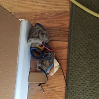 Photo of 1st Choice Carpet and Air Duct Cleaning - Denver, CO, United States