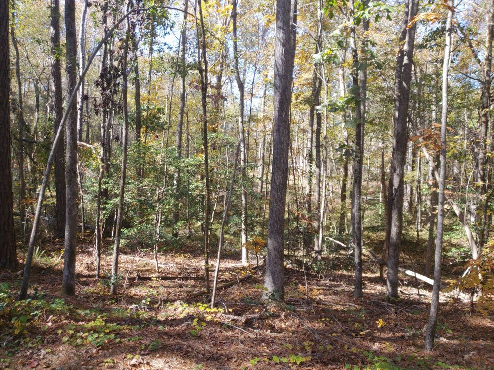 Turnipseed Nature Preserve: 7100 Hunt Valley Trl, Wendell, NC