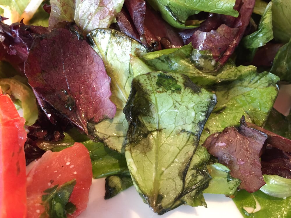 Picture Of The Salad Served With Our Sandwiches Well Past