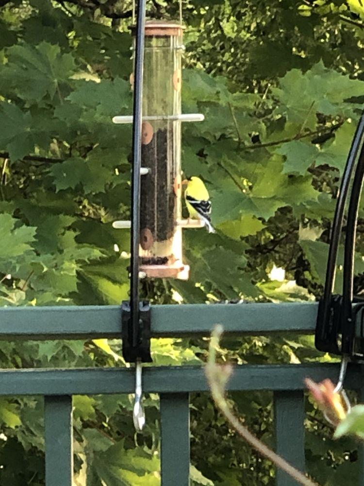 Wild Birds Unlimited: 3173 Golf Rd, Delafield, WI