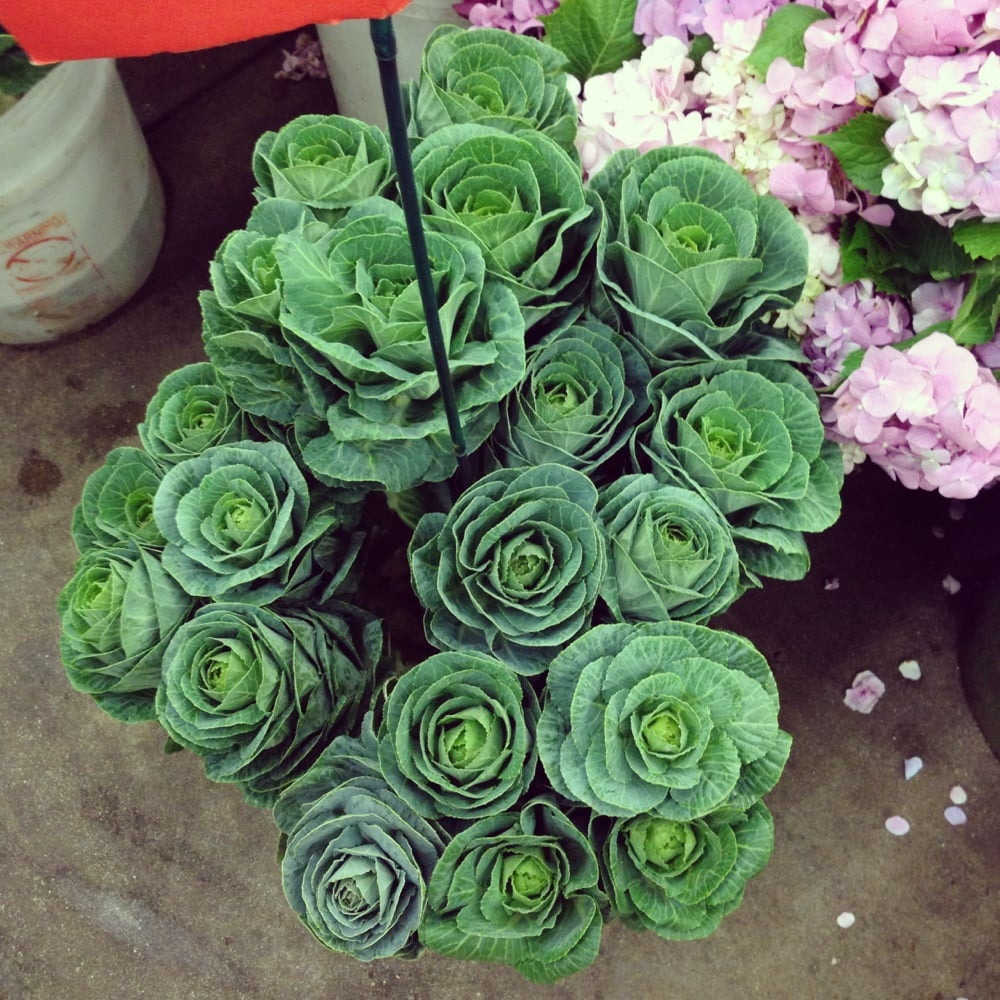 Cabbage Flowers $4