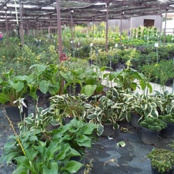 Photo Of Taylor S Nursery Raleigh Nc United States 70 Acres Locally