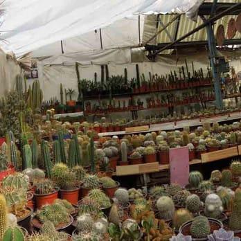 El c reus viveros y jardiner a mz 12 locales 5 y 7 Jardineria xochimilco