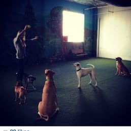 Fido S Indoor Dog Park Closed