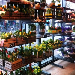 blume 2000 24 fotos blumenladen florist scheel plessen str 19 altona nord hamburg. Black Bedroom Furniture Sets. Home Design Ideas